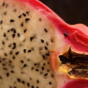 Dragon fruit closeup