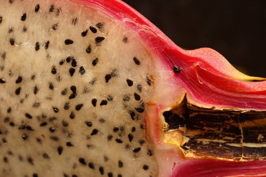 Dragon fruit closeup