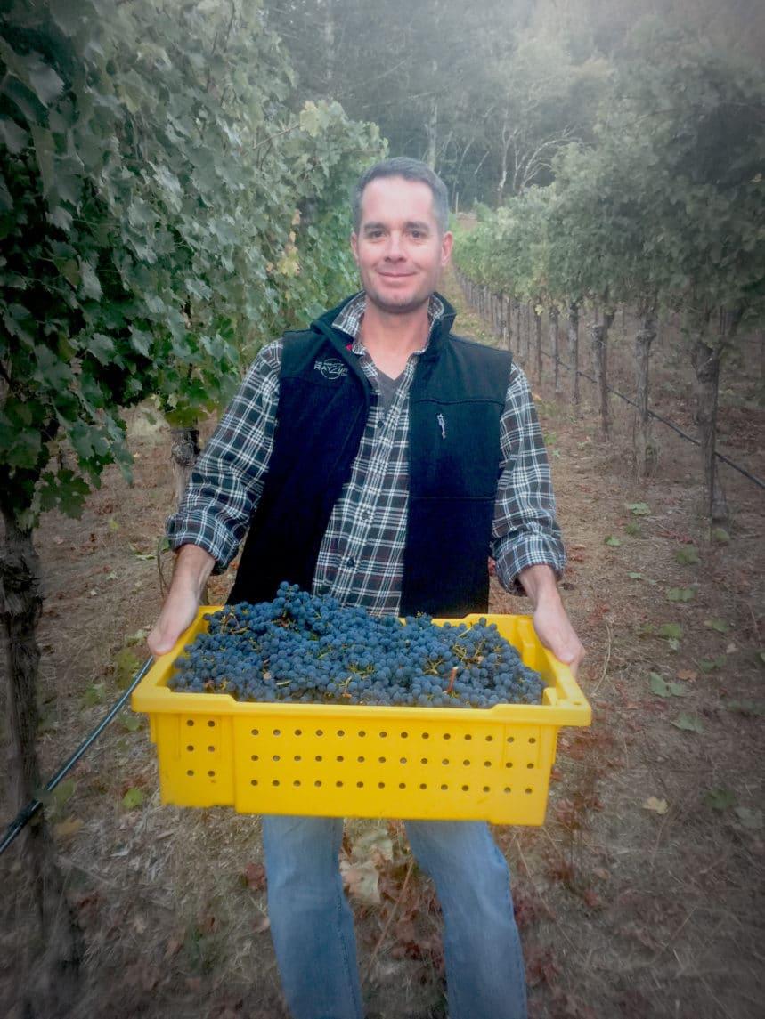 Harvesting Rayzyns. Photo courtesy of The Wine Rayzyn Company.