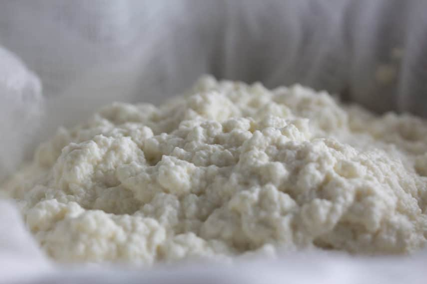 Lactose free ricotta curds straining through cheesecloth.