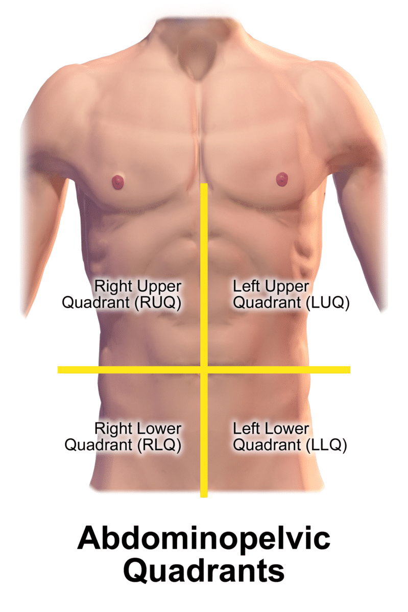 An illustration of the 4 quadrants of the abdomen.
