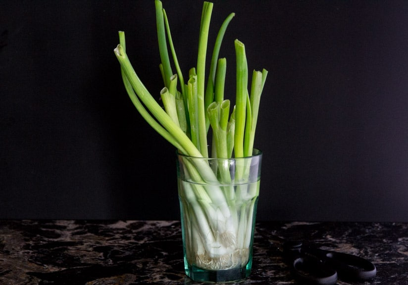Scallions in water in a glass regrowing