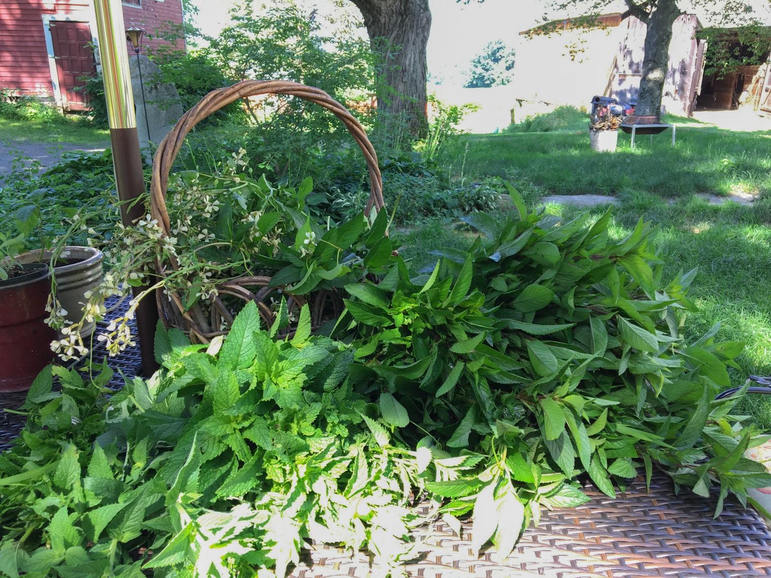 mint fresh from garden