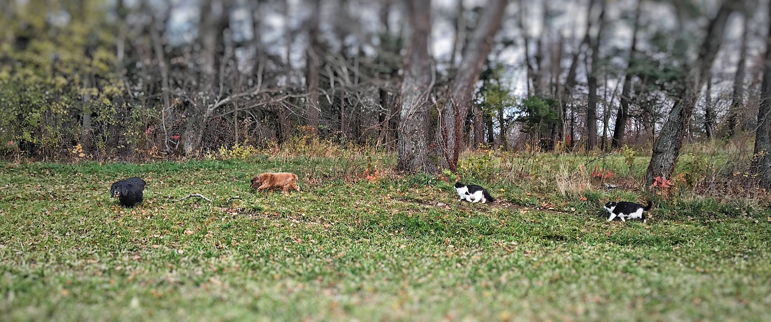 My four-legged companions on one of our daily walks.