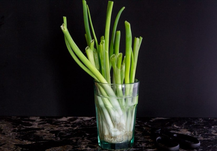 Scallions regrowing in a glass of water.