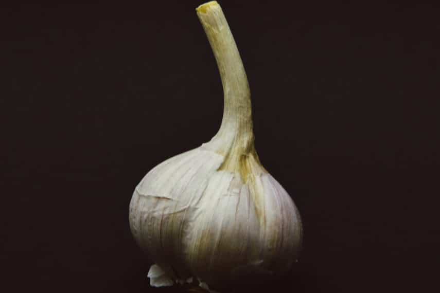 garlic hardneck