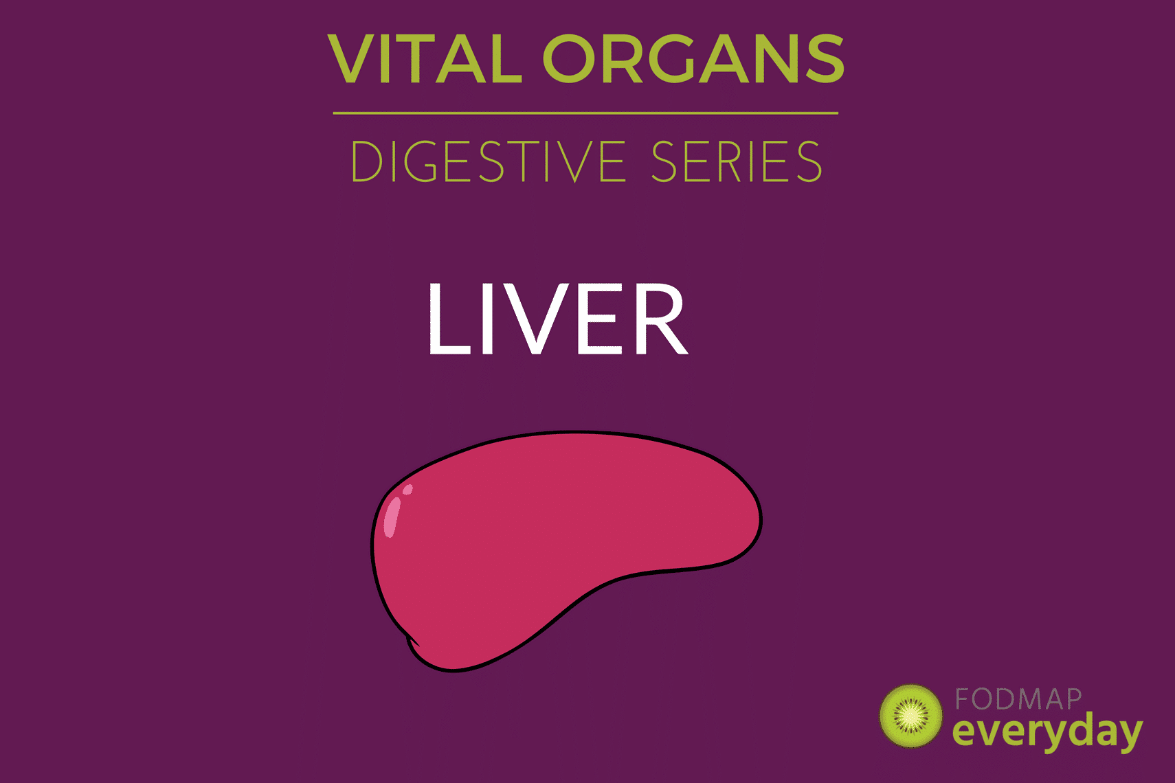 Vital organs digestion series intro fodmap everyday vital organs digestive series the liver ccuart Choice Image