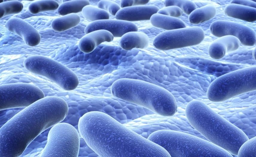 Good Bacteria close up in the intestines