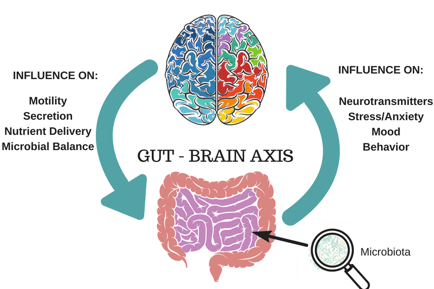 Gut Brain Connection >> The Gut Brain Connection Ibs It S Not All In Your Head Fodmap