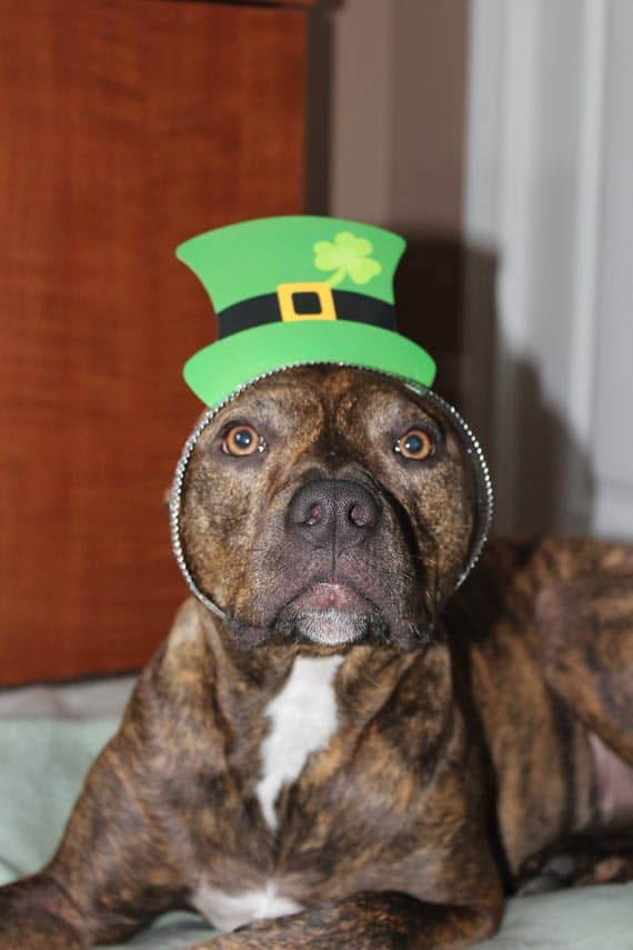 Everyone is Irish on St. Patrick's Day!