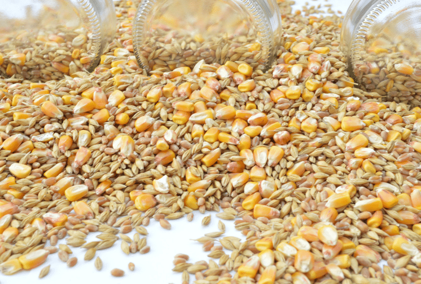 barley and corn spilled over a surface