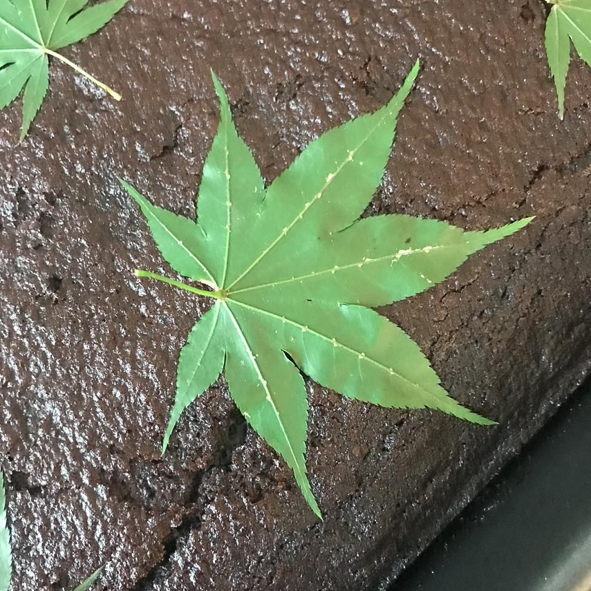 closeup of stencil leaf on top of spicy low FODMAP Snack cake