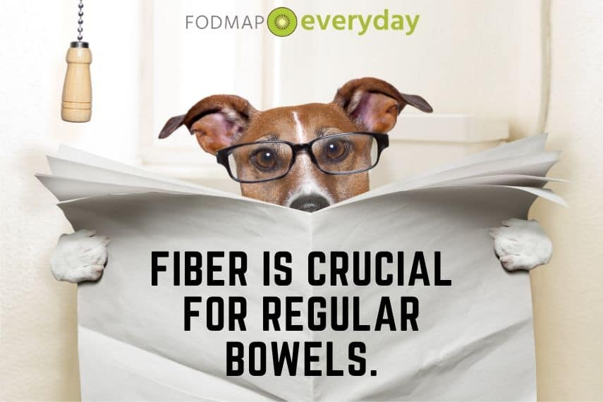 Dog with glasses sitting on a toilet with a newspaper that reads:Fiber is crucial for regular bowels.