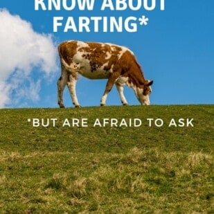 Everything you want to know about farting - cow on hillside with a cloud that looks like a fart coming out of it's backside.