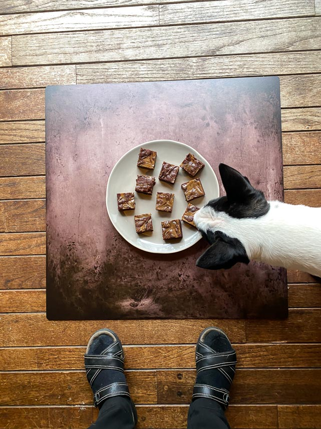 overhead of espresso cream cheese brownies on light plate and brown background with Nora the bull terrier